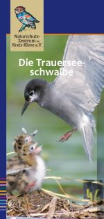 Cover des Flyers Trauerseeschwalbe